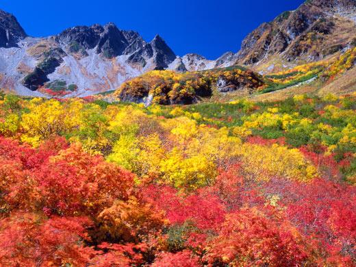 上高地涸沢の紅葉